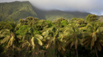 A view of the dense rain forests with the fog-covered volcanic mountains in the backdrop in Dominica. - Photo: Shutterstock
